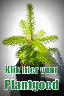 Bolhuis Kerstbomen Plantgoed Kerstbomen